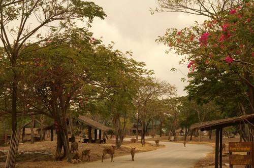 Typical Northen Thai Village At The Ancient City Muang Boran